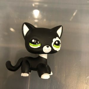 Lps shorthair cat #2249